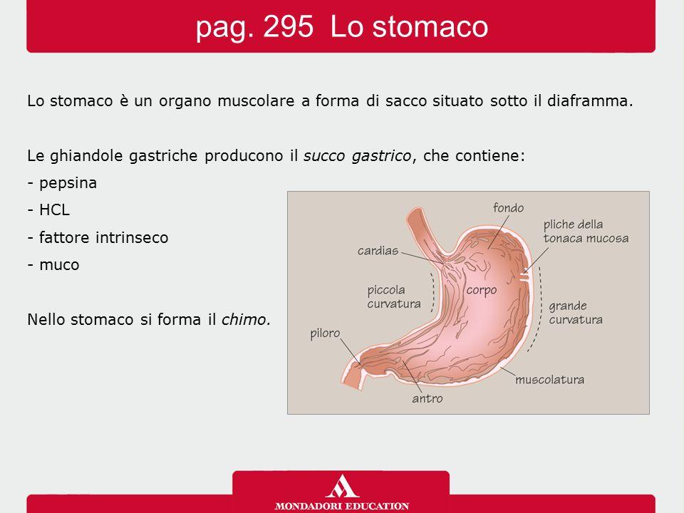 pag. 295 Lo stomaco Lo stomaco è un organo muscolare a forma di sacco situato sotto il diaframma.