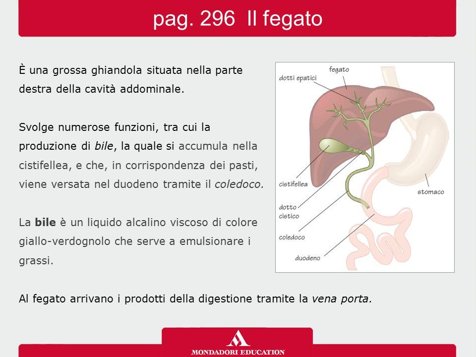 pag. 296 Il fegato È una grossa ghiandola situata nella parte