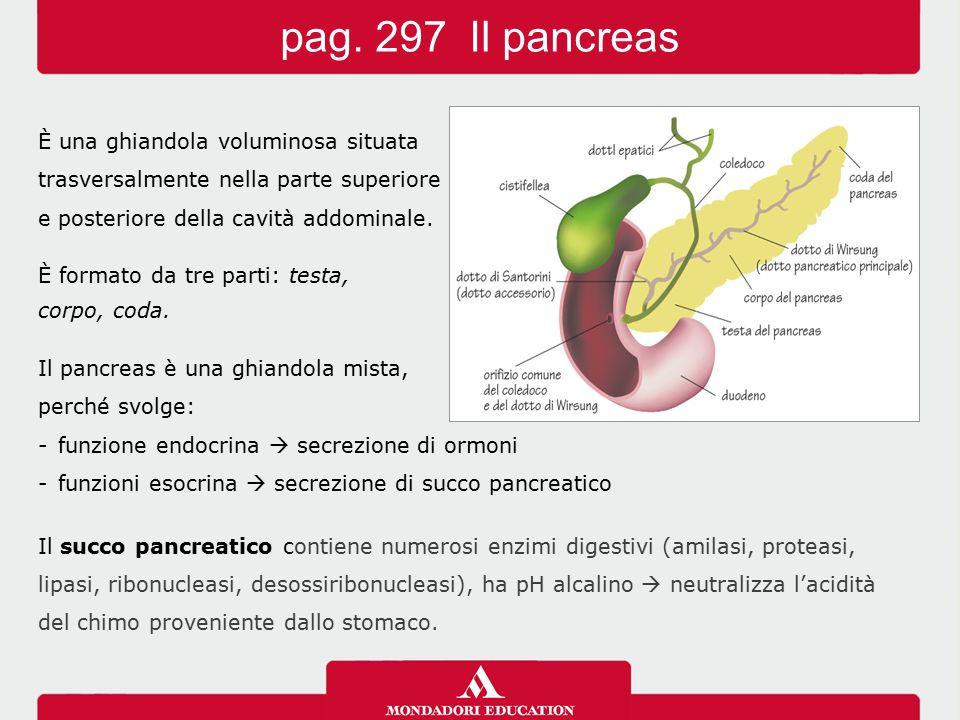 pag. 297 Il pancreas È una ghiandola voluminosa situata