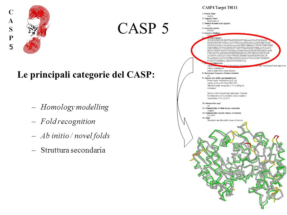 CASP 5 Le principali categorie del CASP: Homology modelling
