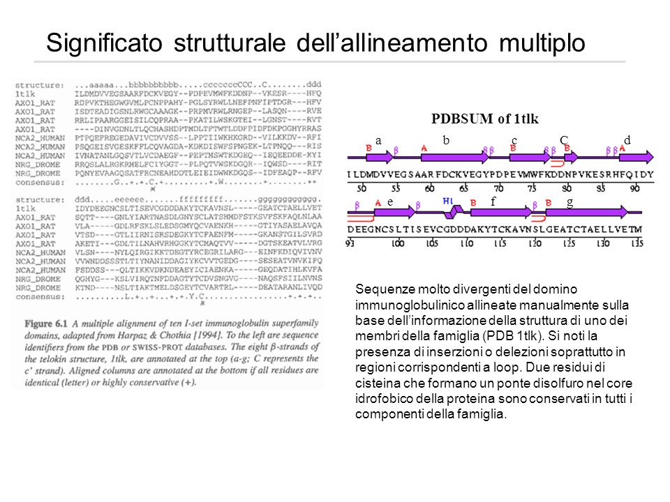 Significato strutturale dell'allineamento multiplo