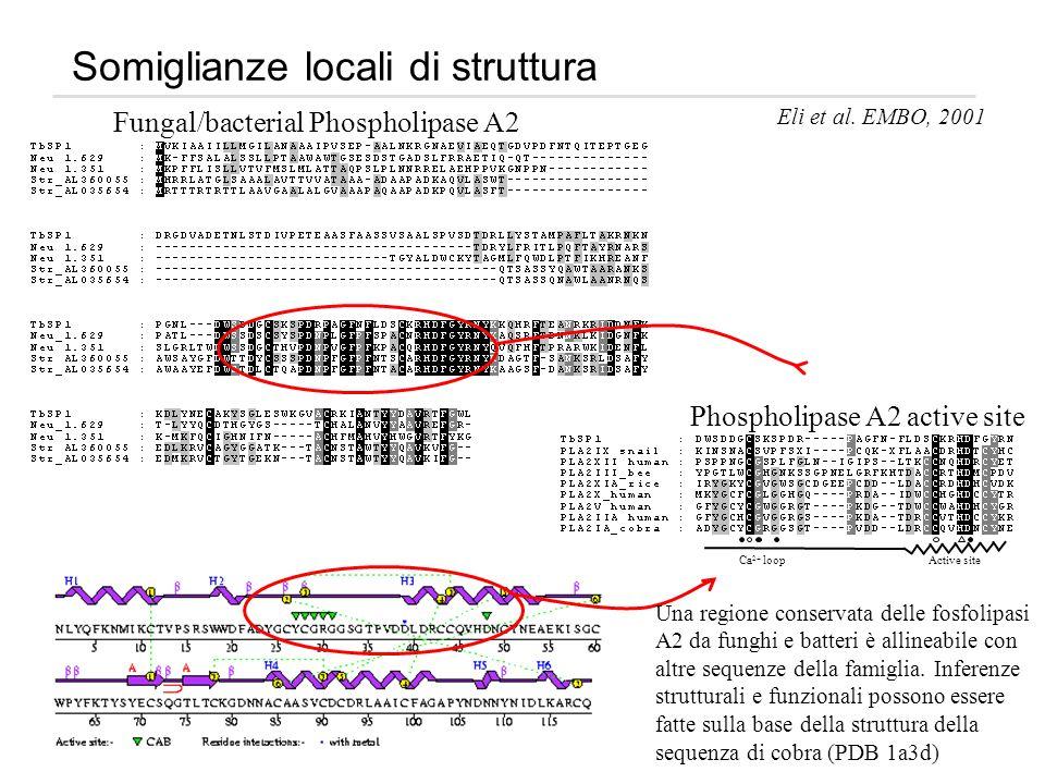 Somiglianze locali di struttura