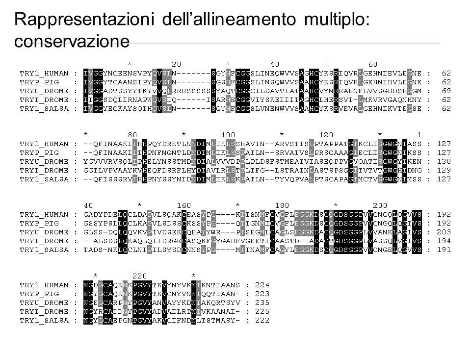 Rappresentazioni dell'allineamento multiplo: conservazione
