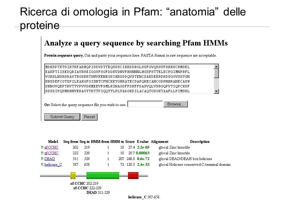 Ricerca di omologia in Pfam: anatomia delle proteine