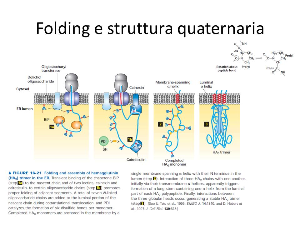 Folding e struttura quaternaria
