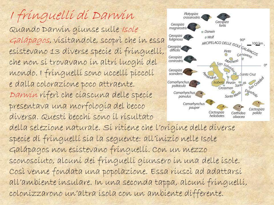I fringuelli di Darwin Quando Darwin giunse sulle Isole