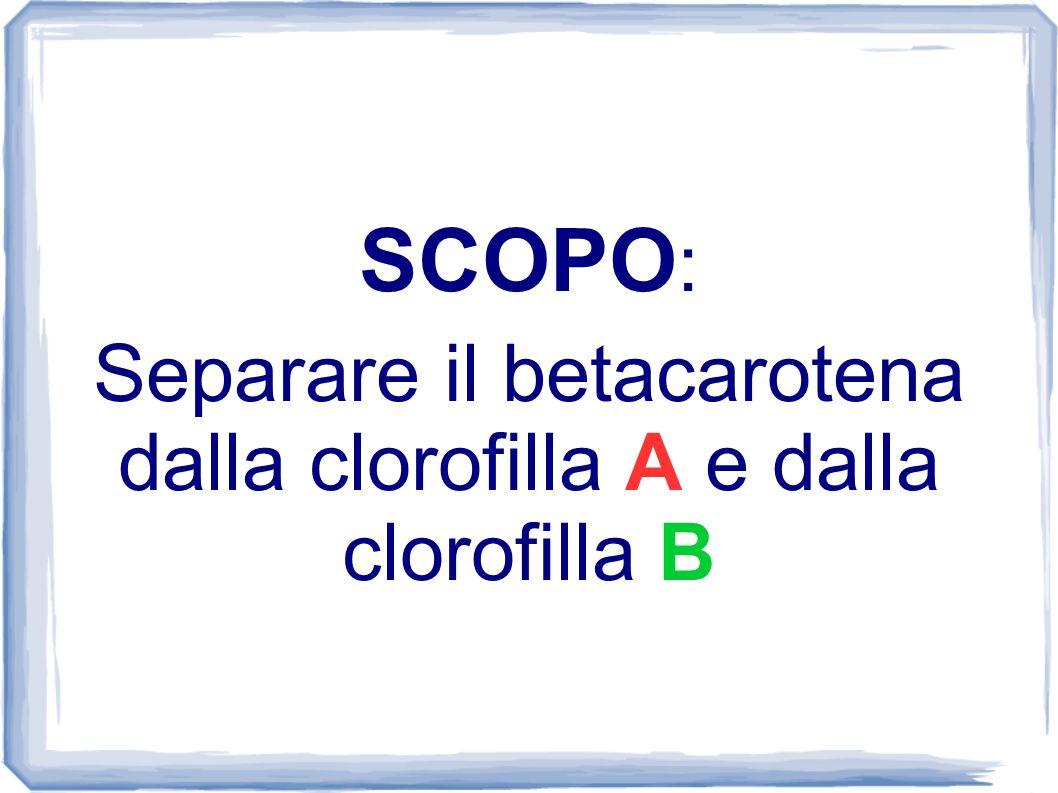 Separare il betacarotena dalla clorofilla A e dalla clorofilla B