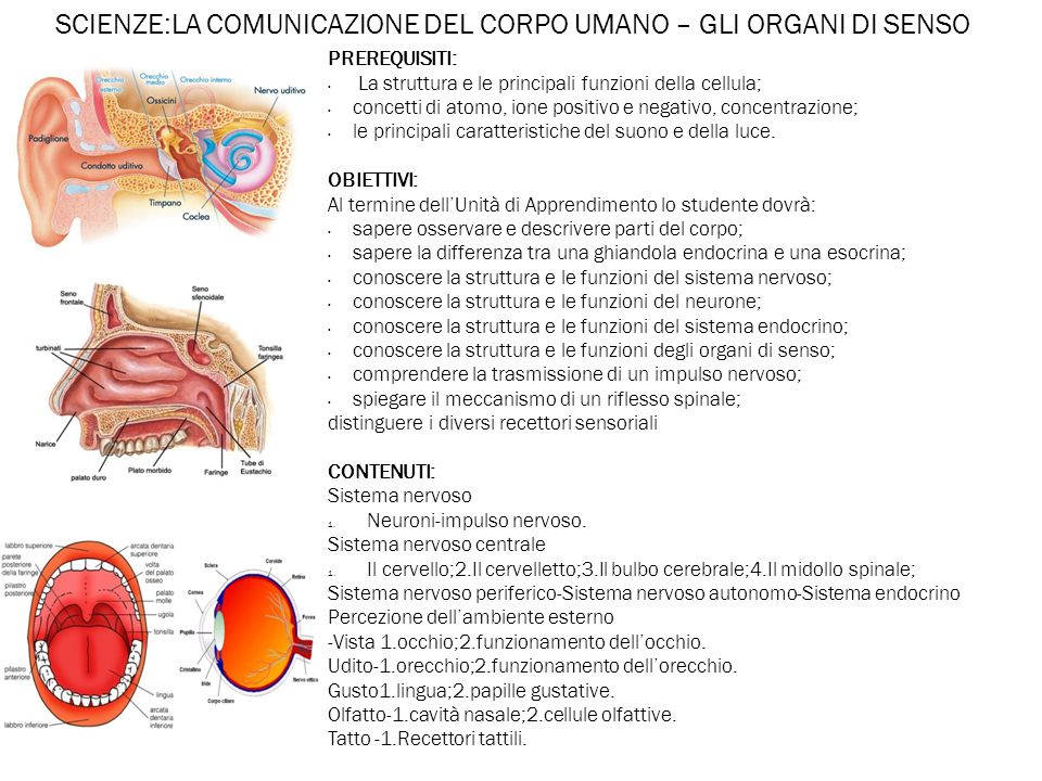 SCIENZE:LA COMUNICAZIONE DEL CORPO UMANO – GLI ORGANI DI SENSO