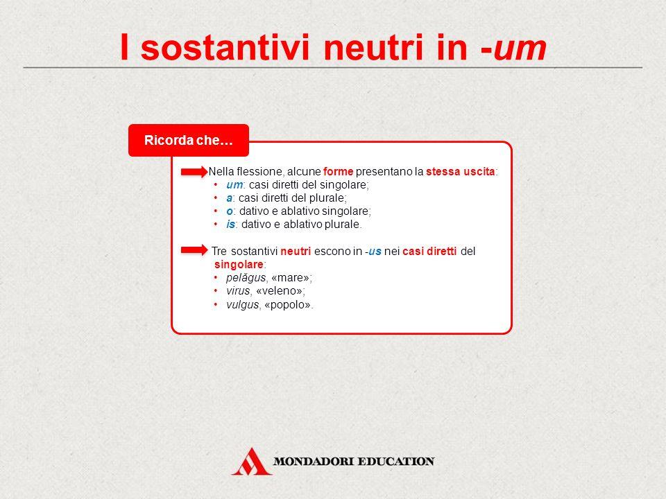 I sostantivi neutri in -um