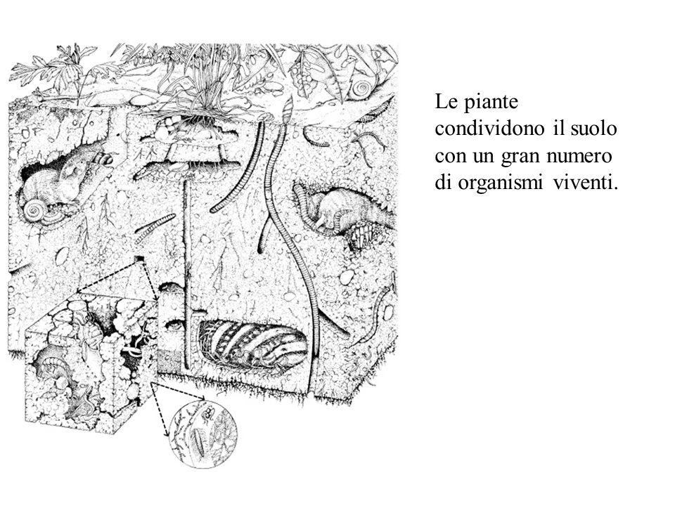 Le piante condividono il suolo con un gran numero di organismi viventi.