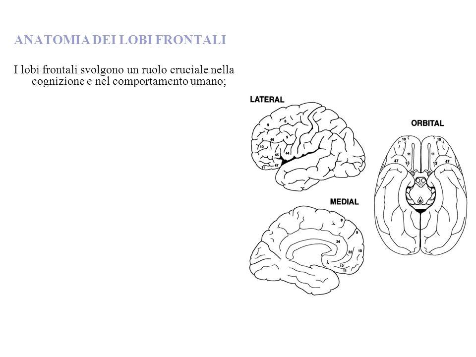 ANATOMIA DEI LOBI FRONTALI