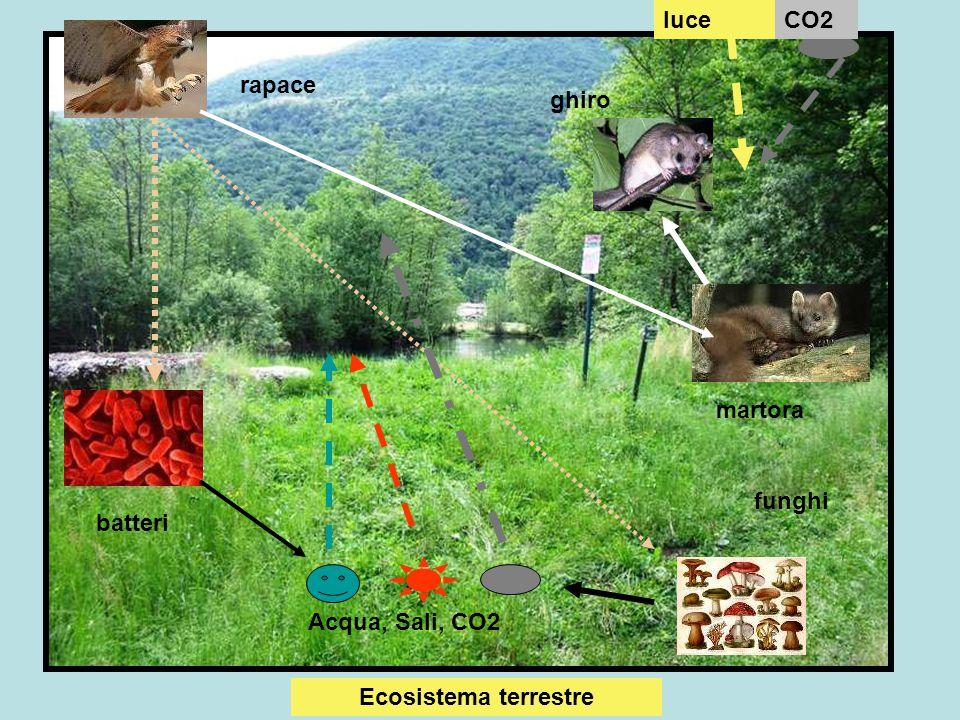 luce CO2 rapace ghiro martora funghi batteri Acqua, Sali, CO2 Ecosistema terrestre
