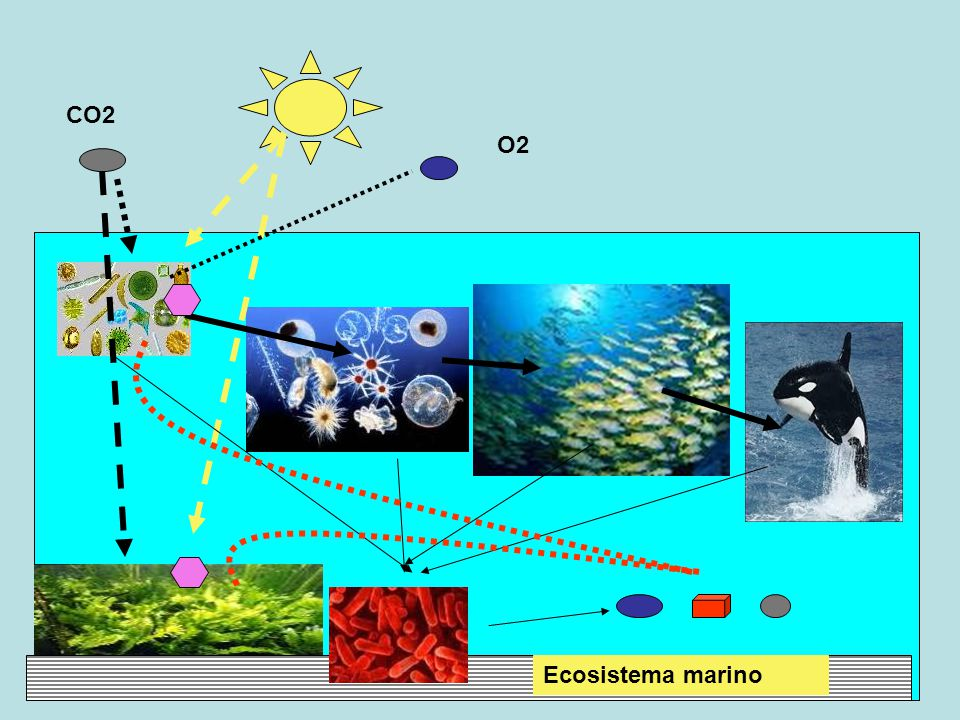 CO2 O2 Ecosistema marino