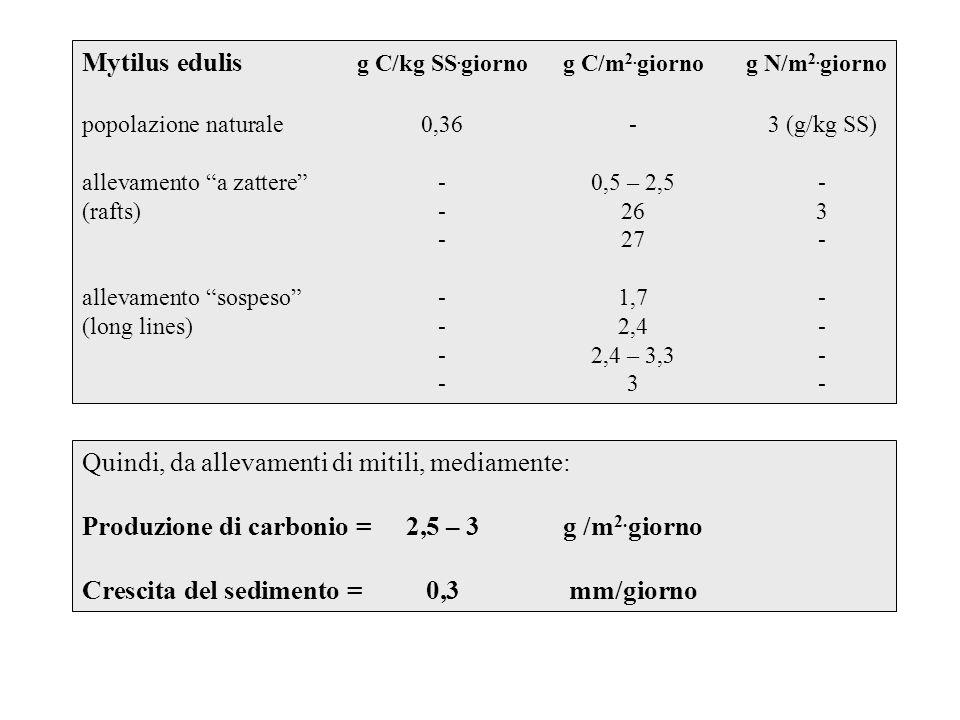 Mytilus edulis g C/kg SS.giorno g C/m2.giorno g N/m2.giorno