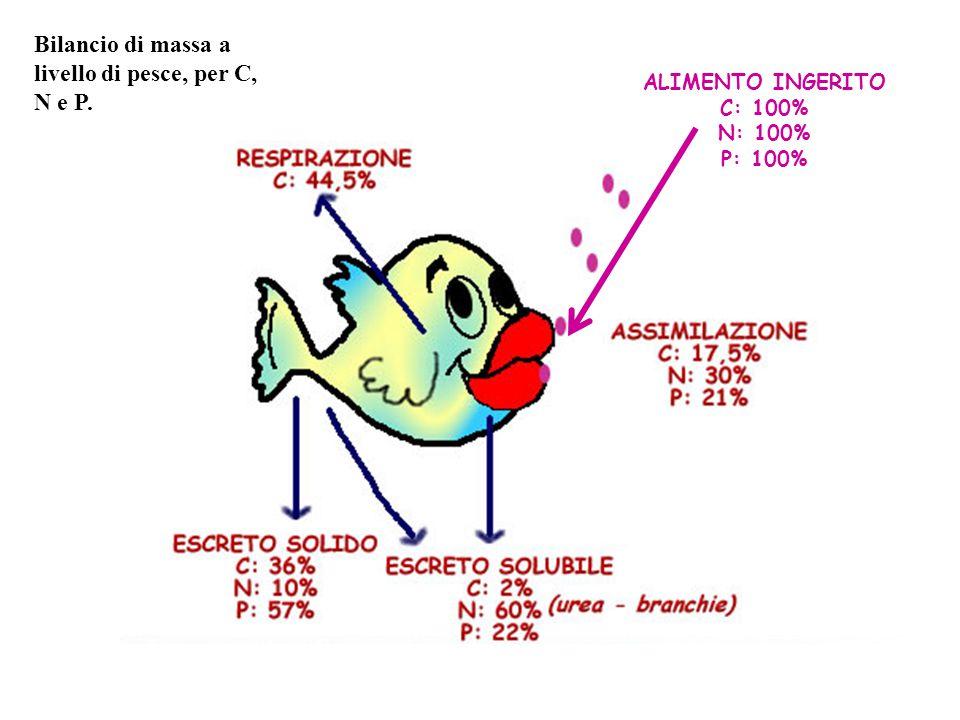Bilancio di massa a livello di pesce, per C, N e P.