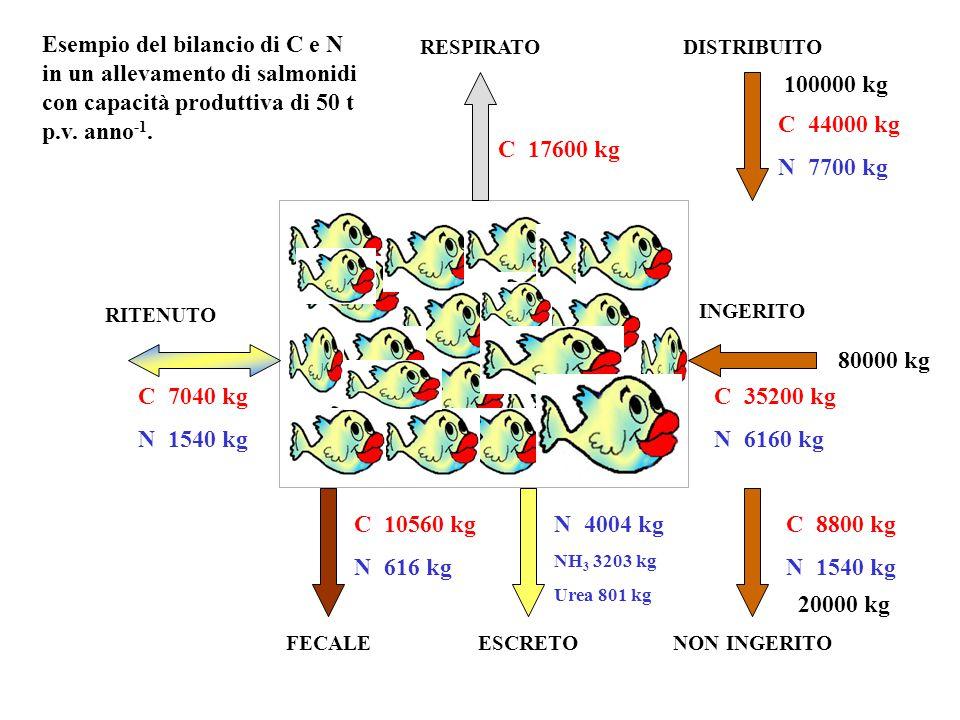 Esempio del bilancio di C e N in un allevamento di salmonidi con capacità produttiva di 50 t p.v. anno-1.