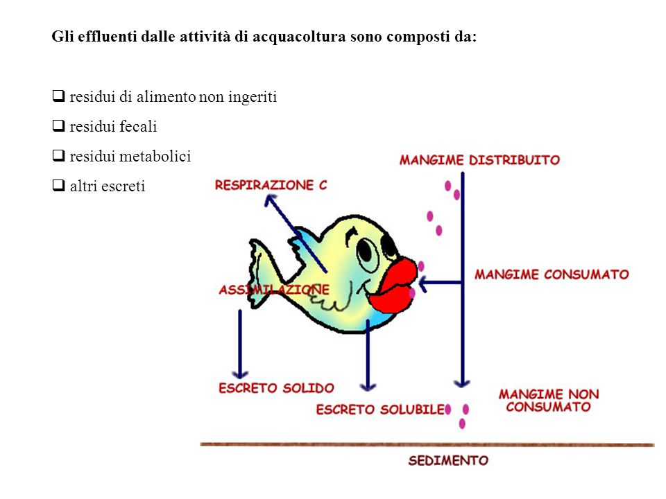 Gli effluenti dalle attività di acquacoltura sono composti da: