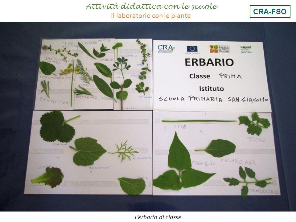 Attività didattica con le scuole Il laboratorio con le piante