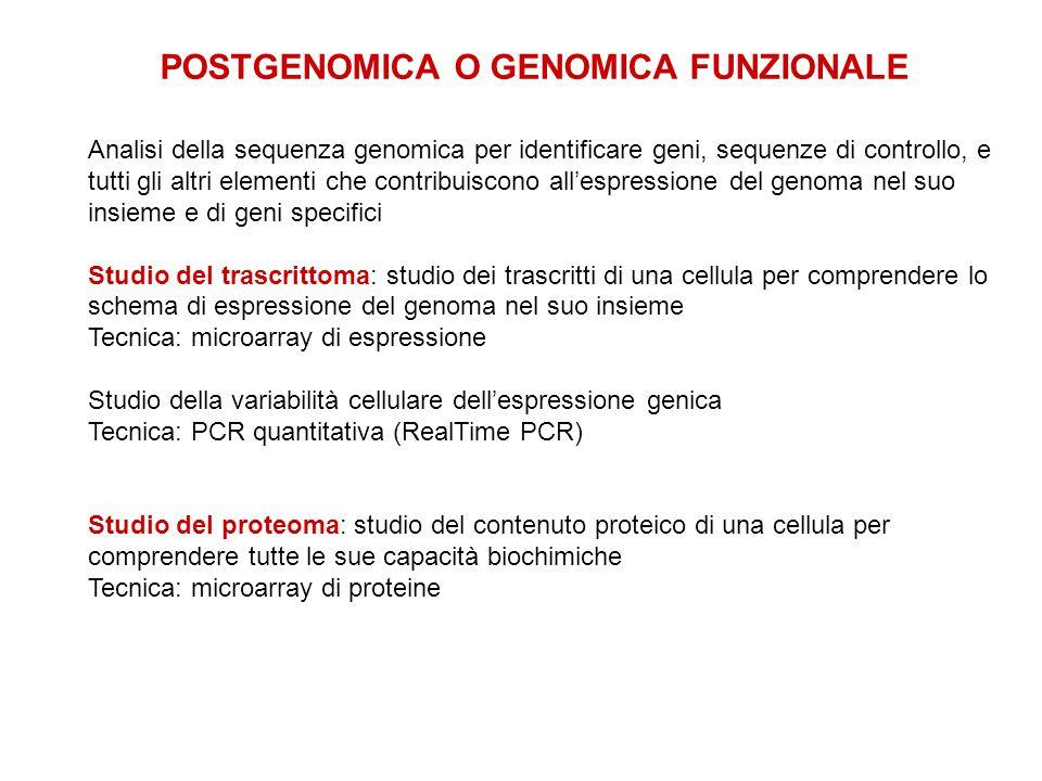 POSTGENOMICA O GENOMICA FUNZIONALE