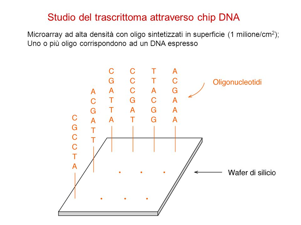 Studio del trascrittoma attraverso chip DNA
