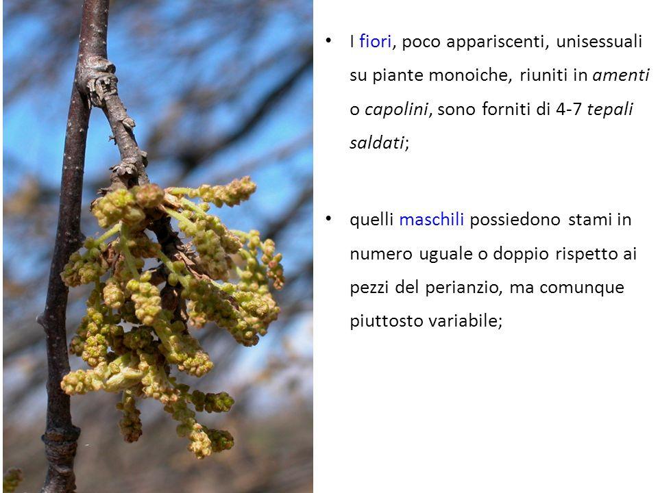 I fiori, poco appariscenti, unisessuali su piante monoiche, riuniti in amenti o capolini, sono forniti di 4-7 tepali saldati;