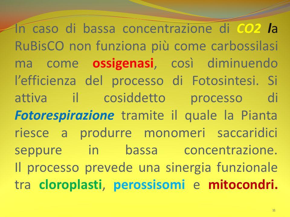 In caso di bassa concentrazione di CO2 la RuBisCO non funziona più come carbossilasi ma come ossigenasi, così diminuendo l'efficienza del processo di Fotosintesi.