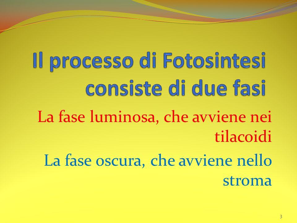 Il processo di Fotosintesi consiste di due fasi