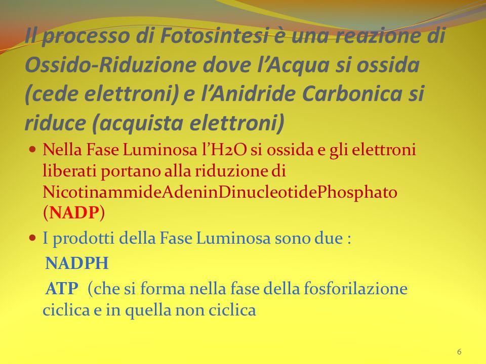 Il processo di Fotosintesi è una reazione di Ossido-Riduzione dove l'Acqua si ossida (cede elettroni) e l'Anidride Carbonica si riduce (acquista elettroni)