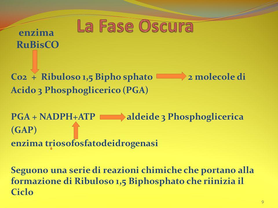 La Fase Oscura enzima RuBisCO
