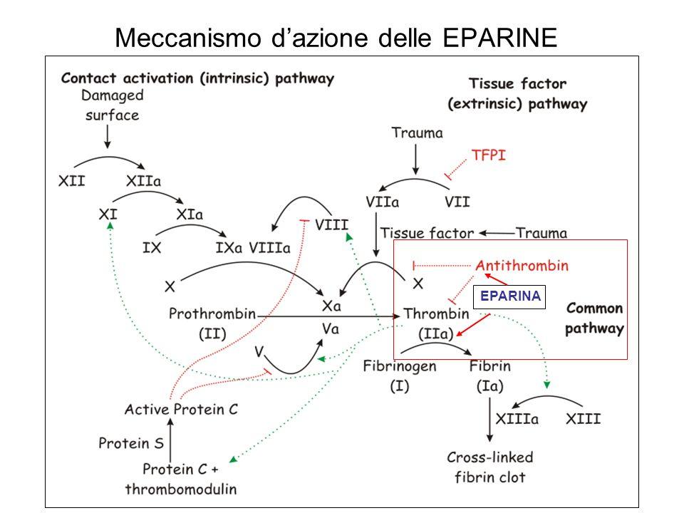 Meccanismo d'azione delle EPARINE
