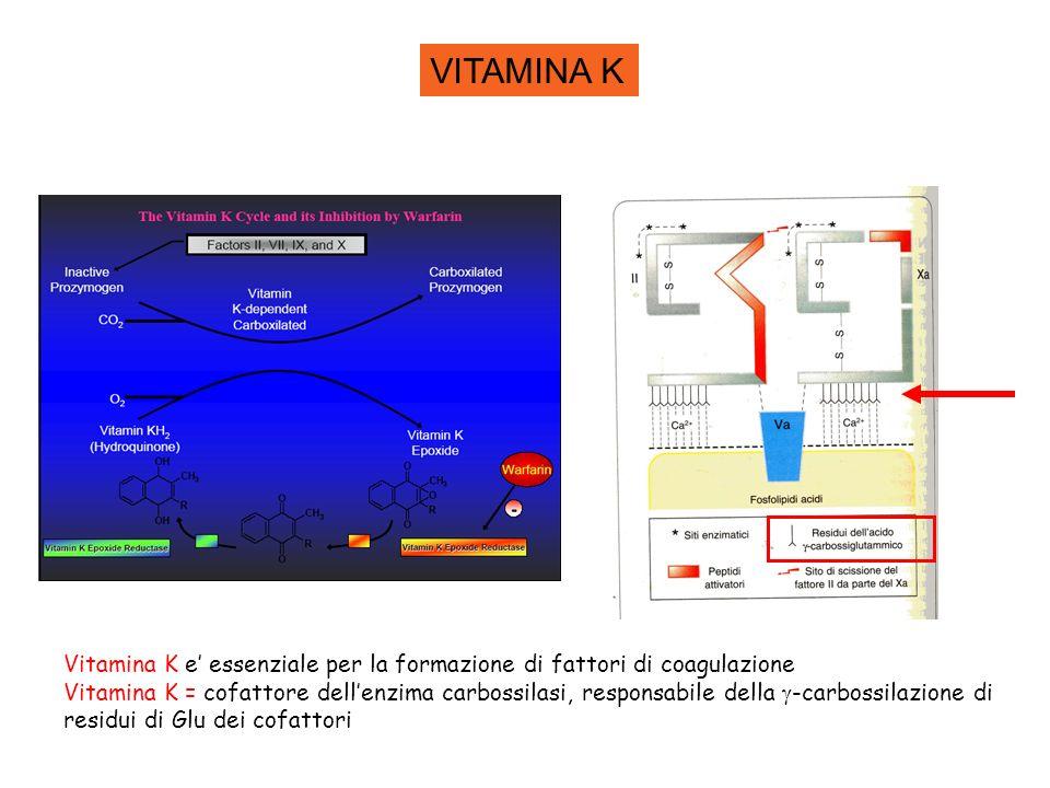 VITAMINA K Vitamina K e' essenziale per la formazione di fattori di coagulazione.