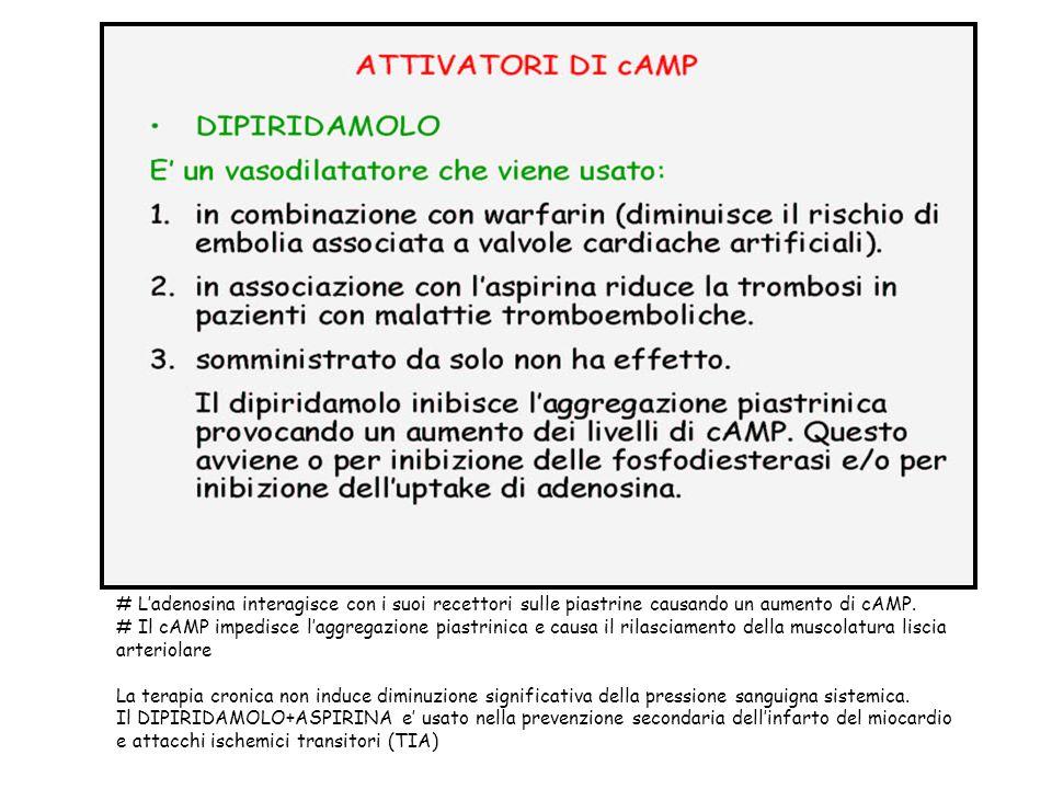 # L'adenosina interagisce con i suoi recettori sulle piastrine causando un aumento di cAMP.