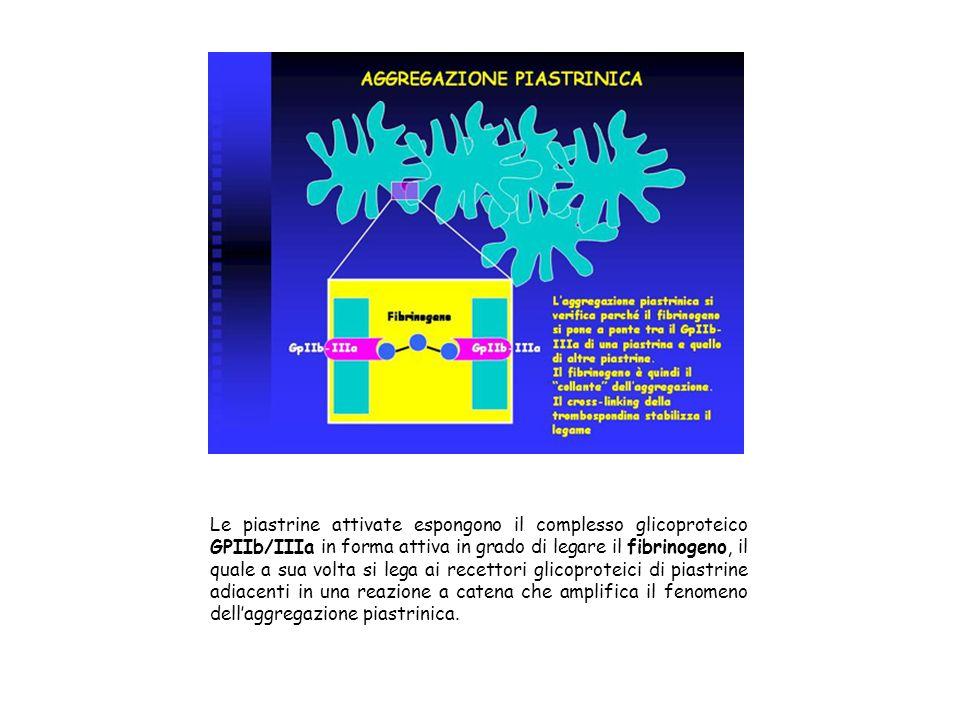 Le piastrine attivate espongono il complesso glicoproteico GPIIb/IIIa in forma attiva in grado di legare il fibrinogeno, il quale a sua volta si lega ai recettori glicoproteici di piastrine adiacenti in una reazione a catena che amplifica il fenomeno dell'aggregazione piastrinica.