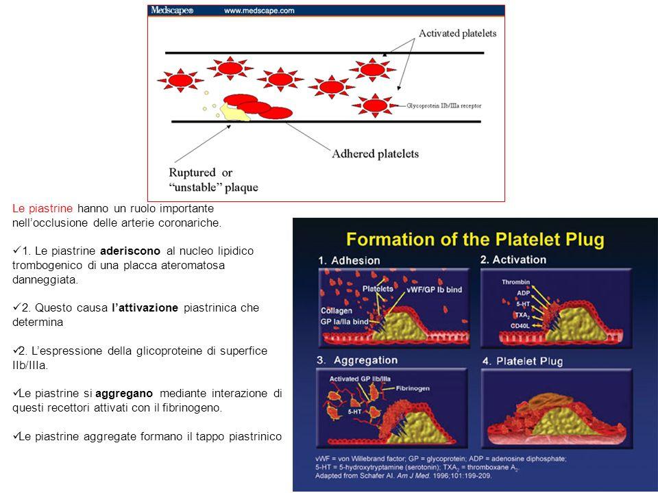 Le piastrine hanno un ruolo importante nell'occlusione delle arterie coronariche.