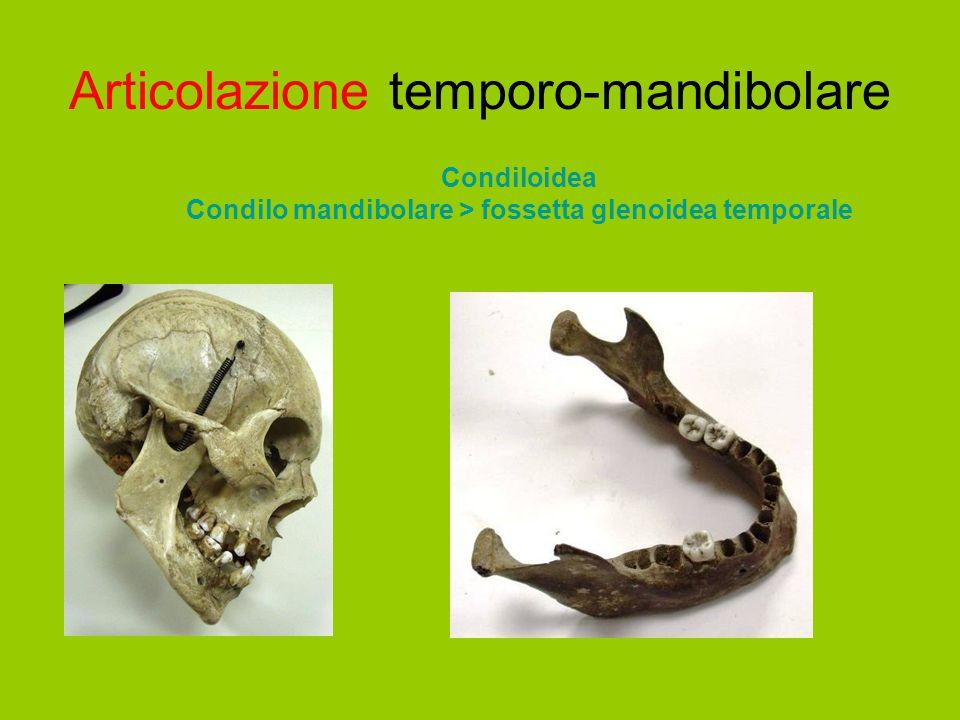 Articolazione temporo-mandibolare