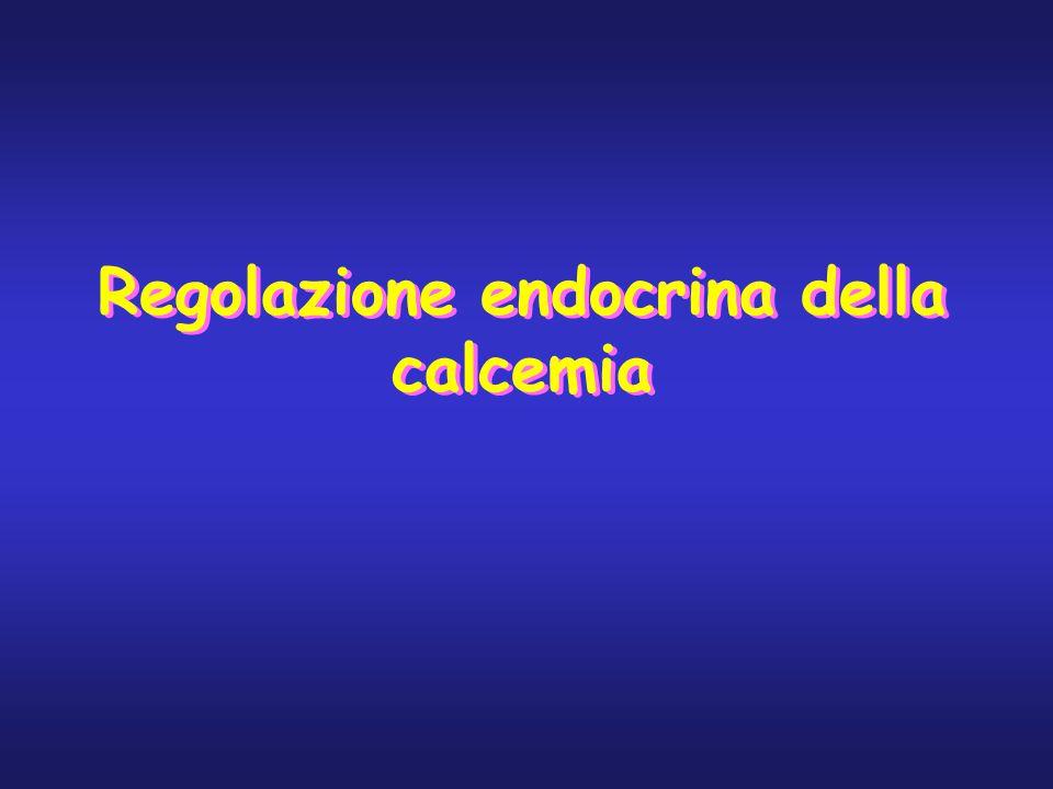 Regolazione endocrina della calcemia