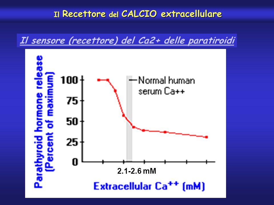 Il Recettore del CALCIO extracellulare