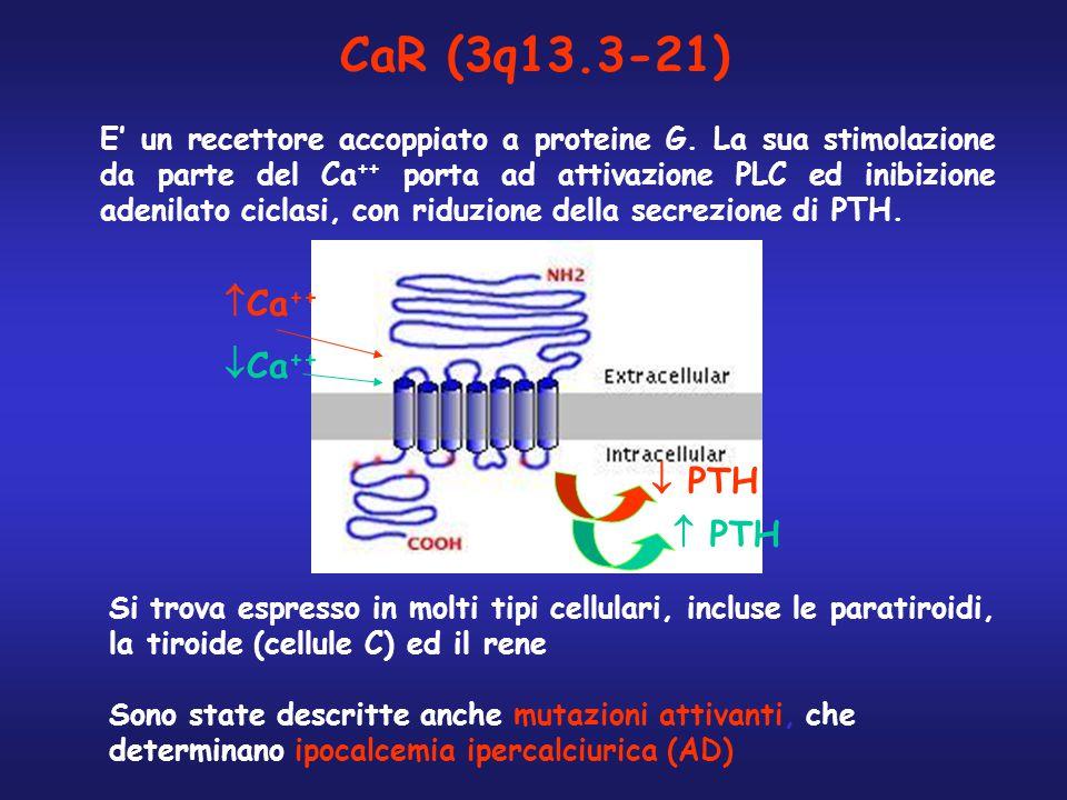 CaR (3q13.3-21) Ca++ Ca++  PTH  PTH