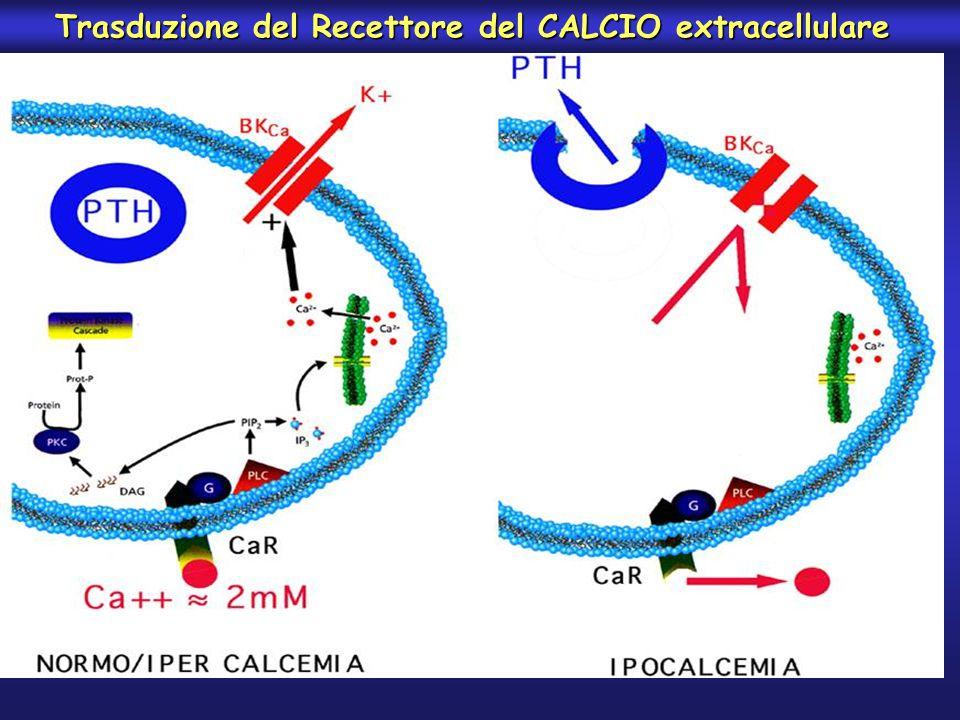 Trasduzione del Recettore del CALCIO extracellulare