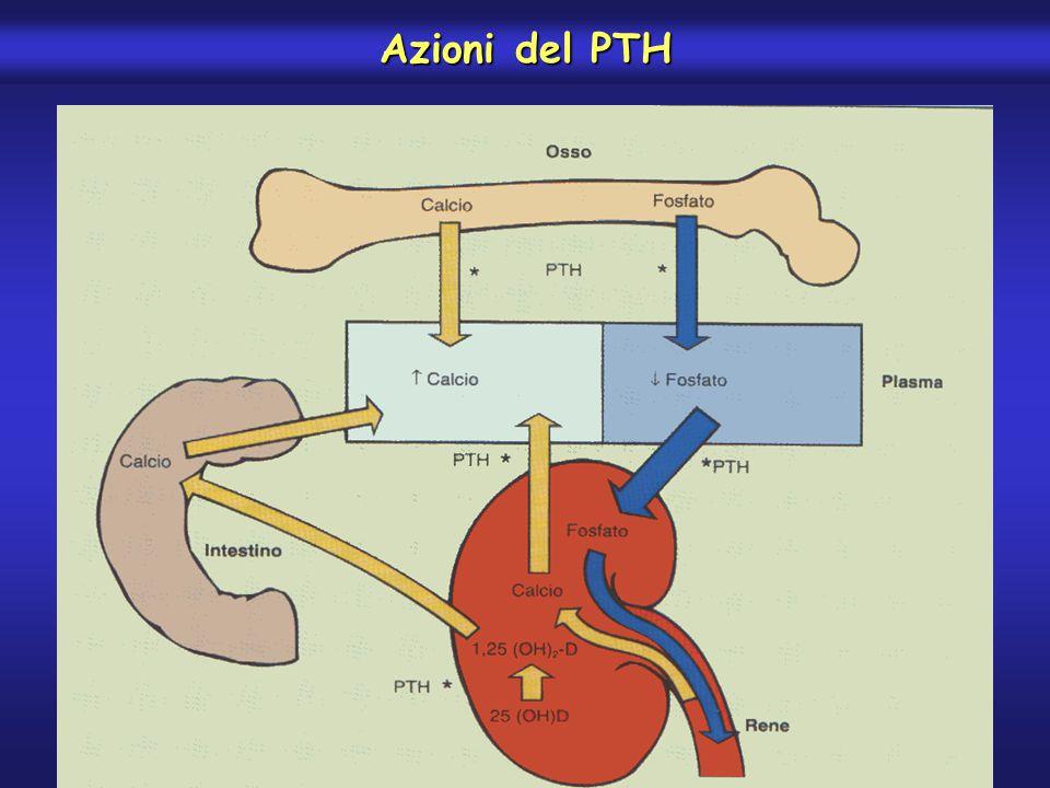 Azioni del PTH