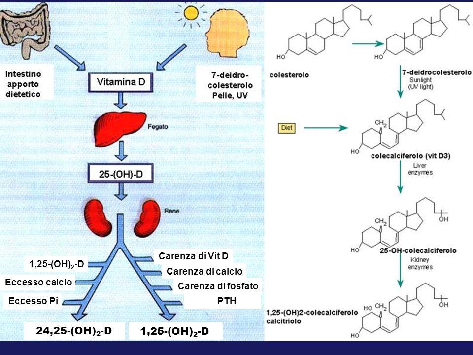 24,25-(OH)2-D Carenza di Vit D Carenza di calcio Carenza di fosfato