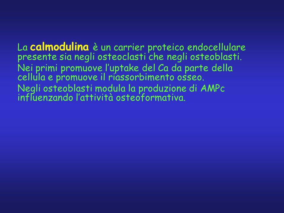 La calmodulina è un carrier proteico endocellulare presente sia negli osteoclasti che negli osteoblasti.