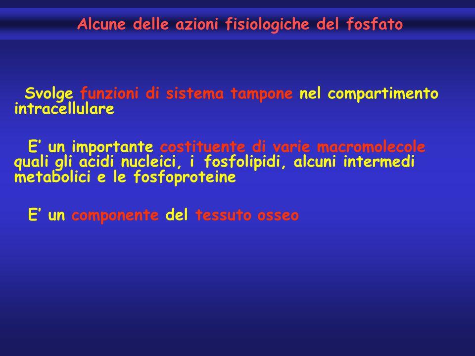 Alcune delle azioni fisiologiche del fosfato