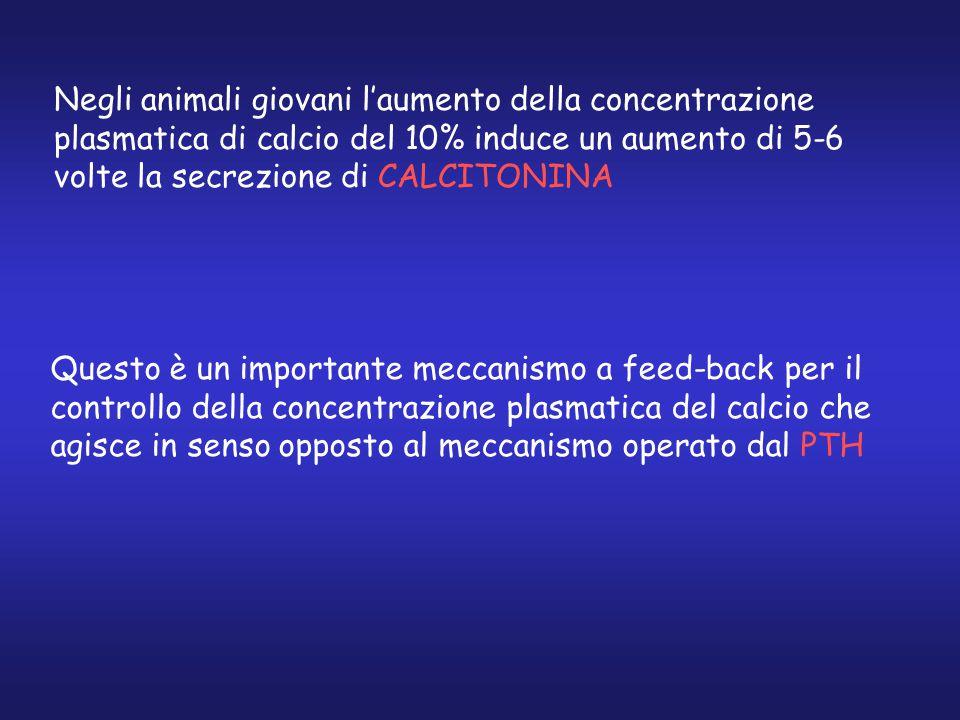 Negli animali giovani l'aumento della concentrazione plasmatica di calcio del 10% induce un aumento di 5-6 volte la secrezione di CALCITONINA