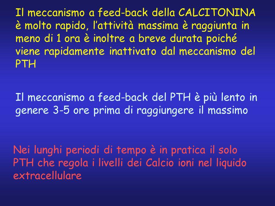 Il meccanismo a feed-back della CALCITONINA è molto rapido, l'attività massima è raggiunta in meno di 1 ora è inoltre a breve durata poiché viene rapidamente inattivato dal meccanismo del PTH