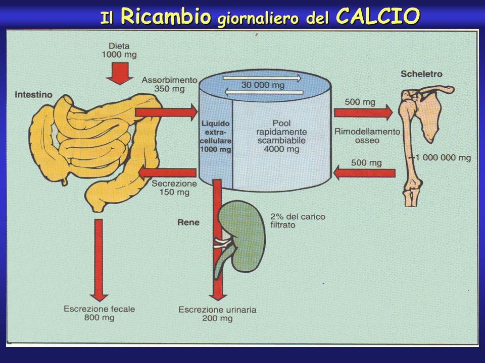 Il Ricambio giornaliero del CALCIO