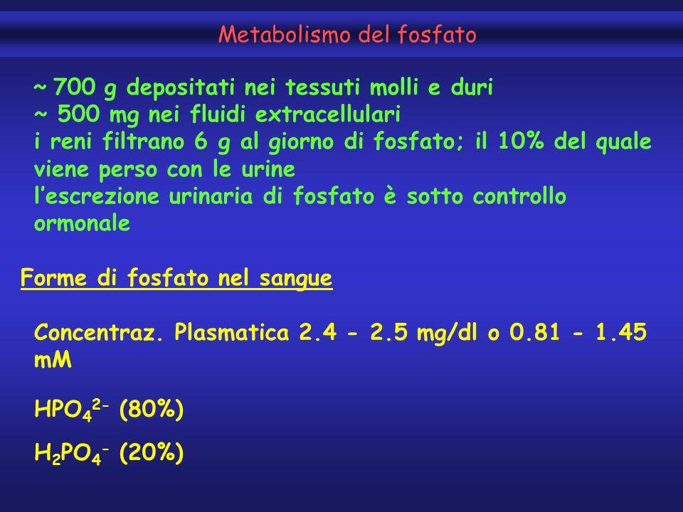 Metabolismo del fosfato