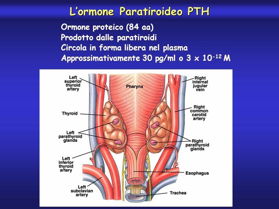L'ormone Paratiroideo PTH