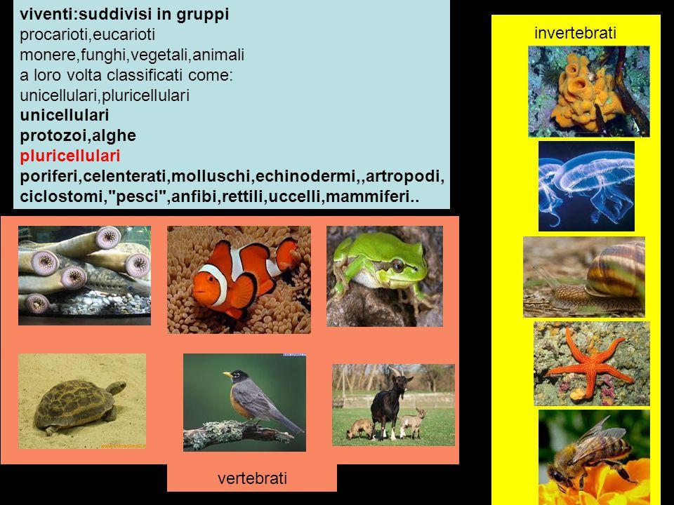 viventi:suddivisi in gruppi
