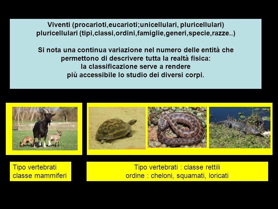 Tipo vertebrati : classe rettili ordine : cheloni, squamati, loricati